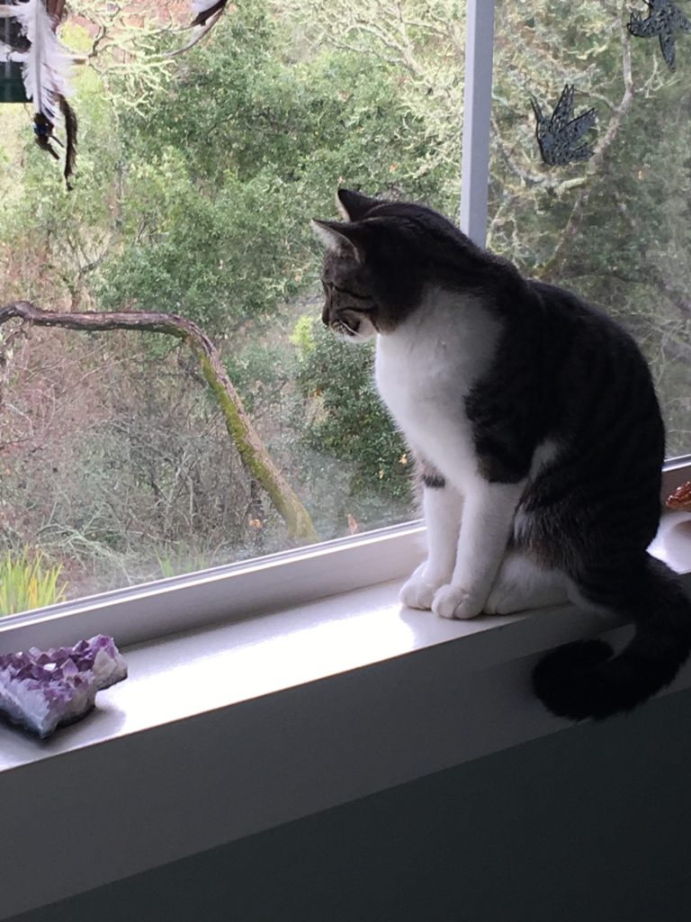 Topaz shows patience as she watches the birdies.